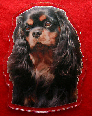 magnet aimant chien cavalier king charles 1a dog magnets imanes perro magneten