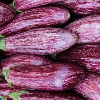 Aubergine Tsakoniki Cylindrical Egg Plant Appx 200 Vegetable Seeds