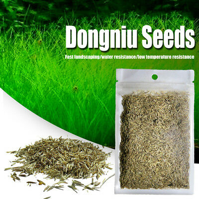 10G Bulk Aquarium Grass Mixed Seeds Water Aquatic Home Fish Tank Plant Decor