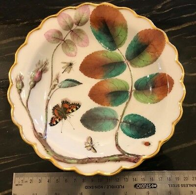 Worcester Hand Painted Cabinet Or Dessert Plate Rose Butterfly Insects Antique