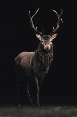 Deer on Black POSTER (61x91cm) NEW Print Art
