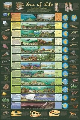 Eras of Life Geological Time Scale POSTER (61x91cm) NEW Print Art