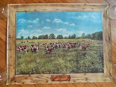 "Vtg 1950's HEREFORDS Breed The American Hereford Association 27 ½"" x 21"" Poster"