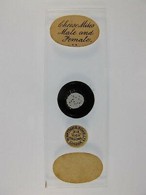 Antique Microscope Slide by W.Watson. Cheese Mites. Male & Female.