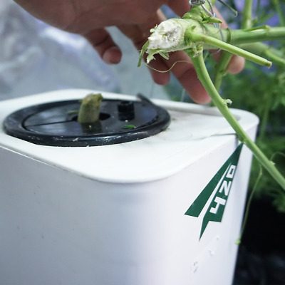 420BOX-植物种植器 hydroponics system RDWC home growing plant automatic compact design