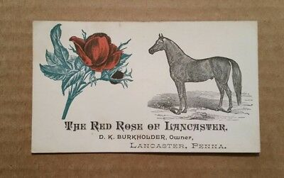 """The Red Rose of Lancaster"" Lancaster,Pa.,Race Horse Trade Card,1880's"
