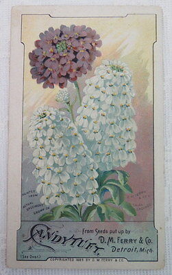 Victorian Trade Card,  Candytuft, D. M. Ferry & Co.