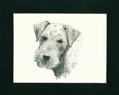 Dog Print 1935 Lakeland Terrier by Francis Wardle VINTAGE