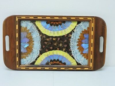 Vtg Butterfly Wing Under Glass Wood Inlay Marquetry Tray Shabby Chic AS IS
