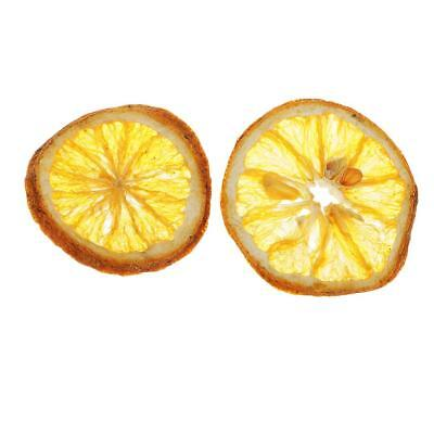 Dried Pressed Lemon Slices For Jewelry Frame Phone Case Craft DIY Making