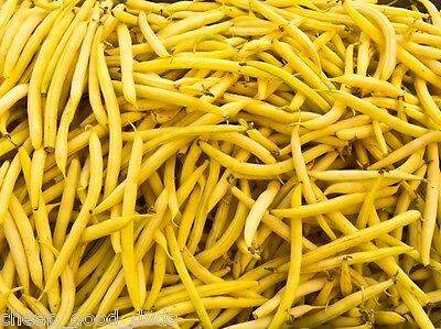 Butter Beans, 20 seeds, Fast Growing Yellow Pods, Tender SPECIAL