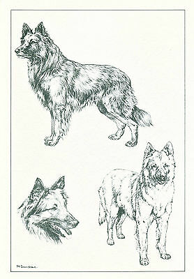 Dog Art Print Tervuren Belgian Shepherd Dog by Davidson