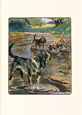 Dog Print 1906 Otterhound Dogs by Vernon Stokes Otter Hound ANTIQUE