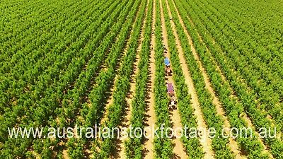 Wine & Vineyard Stock Footage - $200 Download Voucher (Aerial Photography)