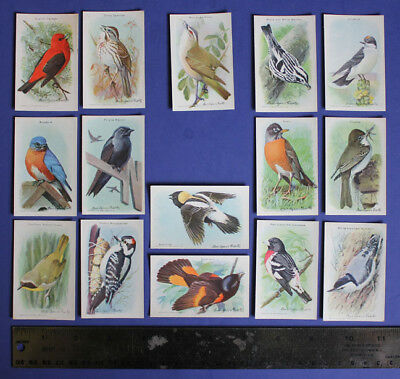 Vintage Arm & Hammer Birds of America Cards, Church & Dwight Grocers, 9th