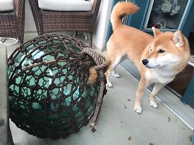 Vintage 18' Extra Large Japanese Glass Fishing Float, FF with net