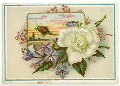 Albrecht Piano 1876 Awards W.F. Flynn Youngstown Ohio OH Victorian Trade Card