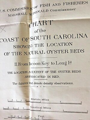 Antique Map Coast of South Carolina Oyster Beds. 1891. U.S. FISHERIES