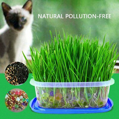Approx 1300Pcs Harvested Cat Grass Seed Organic Cat Snack With Mineral Soil