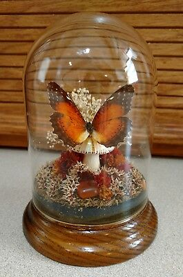 """5-1/2"""" Tall Real Vintage Butterfly in Glass Dome on Wood Base with Dried Flowers"""
