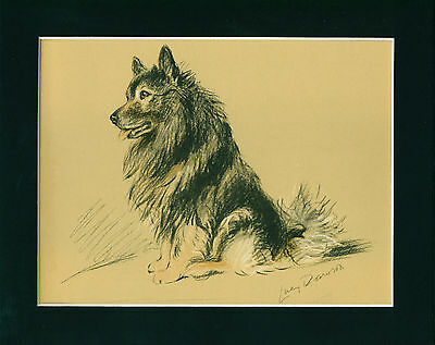 Dog Print 1940 Keeshond by Lucy Dawson VINTAGE