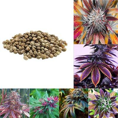 1Bag Medical Cannabis Bonsai Potted Marijuana Seeds Home Garden Plant Hemp