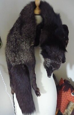 Superb Genuine Vintage Silver Fox Fur Stole - Glass Eyes -- large and long