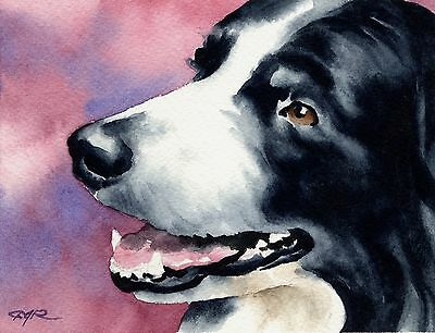 BORDER COLLIE Painting Dog 8 x 10 ART Print Signed by Artist DJR