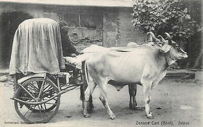 India Japur Zenna Cart Bhel 2 Oxen Pull Native Woman's Carriage Printed Card