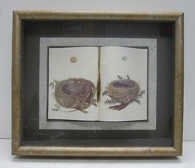 Robin's Nest & Eggs Bird Lithograph & Book Collage Sculpture in Shadow Box Frame