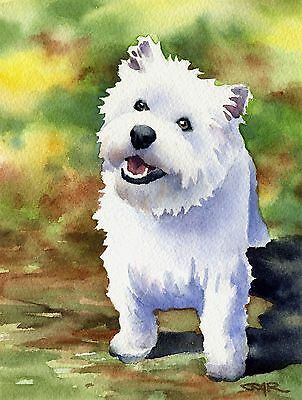 WEST HIGHLAND WHITE TERRIER Dog Painting 8 x 10 ART Print Signed by Artist DJR