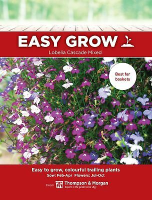 Thompson & Morgan Easygrow - Lobelia Cascade Mixed - 500 Seeds