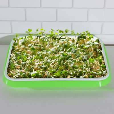 Seed Sprouter Tray Soil-Free Plastic Wheatgrass Mung Bean Seed Sprouting Growing