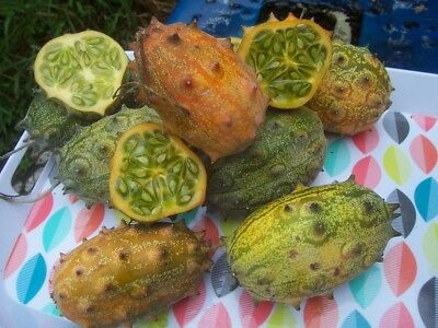 Kiwano Fruit, 20+ Fresh Seeds, Easy To Grow, Drought Tolerant Exotic Cucumber