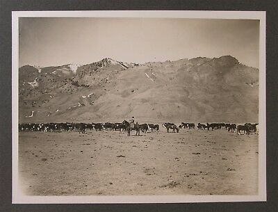1910s WILLIAM F BUFFALO BILL CODY CABINET CARD PHOTO HERDING CATTLE AT TE RANCH