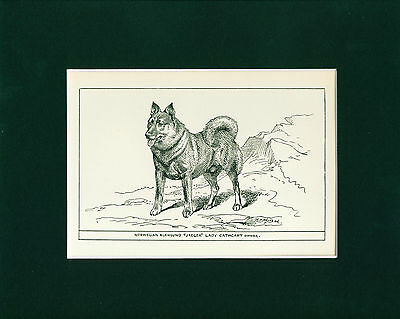 Dog Art Print 1900 Norwegian Elkhound Dog ANTIQUE