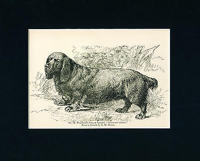 Dog Print 1892 named Sussex Spaniel Dog ANTIQUE
