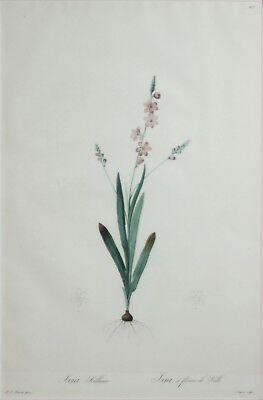 PIERRE JOSEPH REDOUTE-French Realist-Two Hand Colored LIM.ED Botanical Etchings