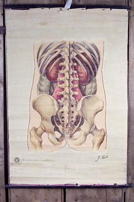 "Vintage~ c1930 ~ ""St. John Ambulance"" ""General Anatomy No 2""~ Educational Poster"