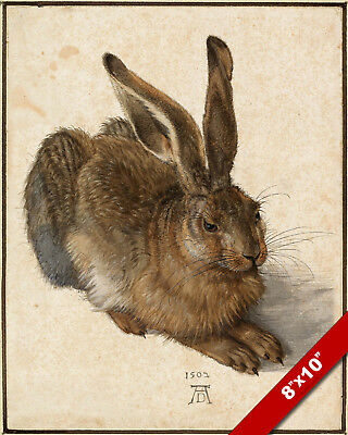 Albrecht Durer Young Hare Painting 8x10  Fine Art Print Real Canvas Bunny Rabbit
