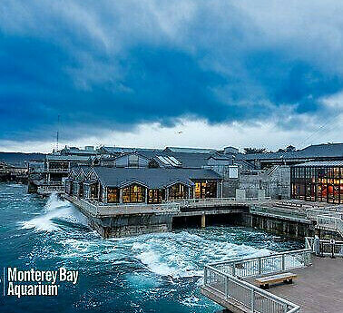 Monterey Bay Aquarium Tickets    A Promo Discount Savings Tool