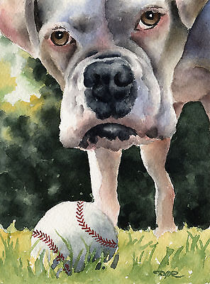 WHITE BOXER Watercolor DOG 8 x 10 Art Print Signed by Artist DJR