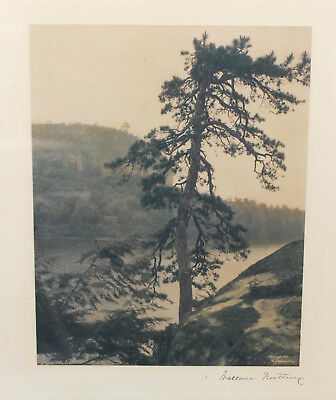 Rare Wallace Nutting Hand Tint Pine Tree Antique Photograph Arts & Crafts 1906