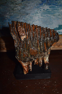 Wooley Mammoth Tooth  *  Beautiful Color And Presentation * 6 Inches