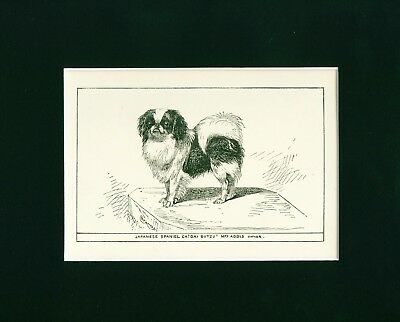 Dog Art Print 1900 Japanese Chin Dog ANTIQUE