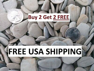 Small Flat Gray Grey Round Oval Beach Pebbles Stones Rocks (200+ Count) For Art