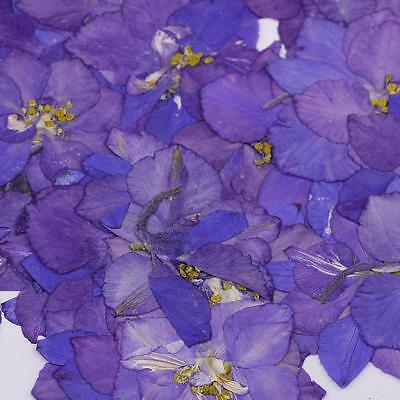 50pcs Blue Pressed Natural Dried Flowers for DIY Phone Case Decoration Craft