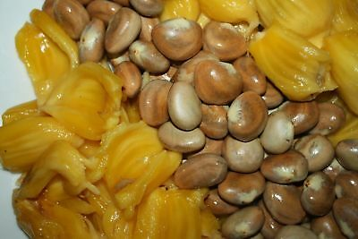 100 % Natural Jack Fruit Seeds Very Easy to Grow Free Shipping from Srilanka