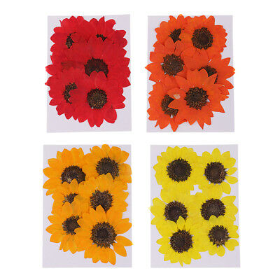 6pcs Pressed Dried Real Flower Sunflower Scrapbooking Embellishments 4-6cm