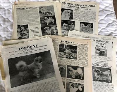Lot of Tibetan Spaniel Dog Paper Items Clippings Kennel Ads 1935-1986